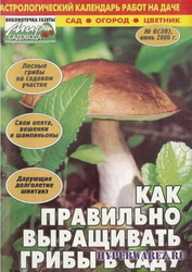 Как правильно выращивать грибы в саду